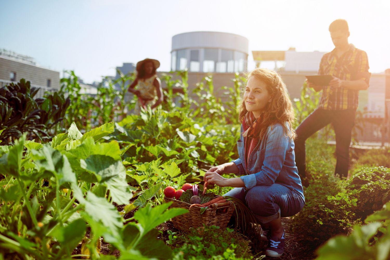 Anbau von Gemüse und Obst mitten in der Stadt auf einem alten Fabrikgelände: Junge Menschen beim Urban Gardening