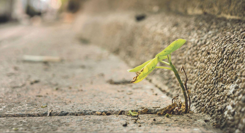 Pflanze wachst am Straßenrand zwischen Beton. Thema: Ökologisch Bauen